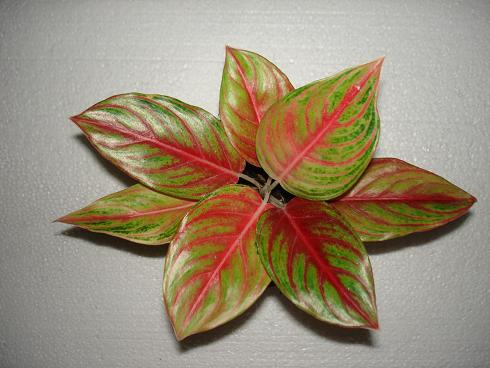 silk-red